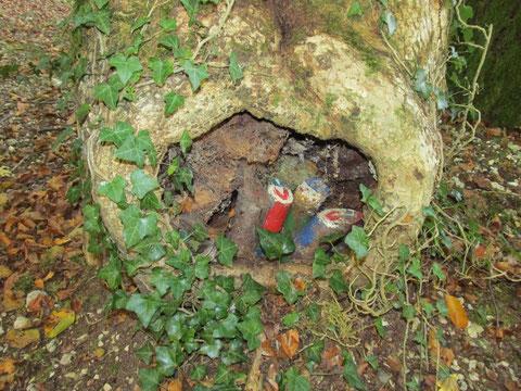 ZWERGLEIN in Baumhöhle, Dittingen/BL