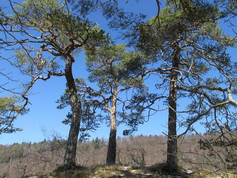 ....... Heil-Baum-Geister für die innere Freiheit.