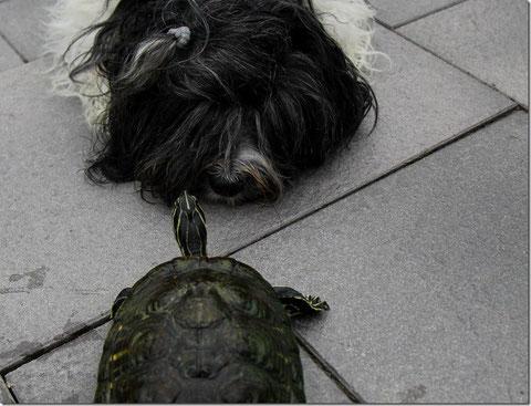 """Lieblingsfoto Okt. 2013: Willmas Freundin """"Selma""""! Sie gehört einer Nachbarin und in den Sommermonaten lebt sie in unserem Teich! Auf ein Foto mit Robin und der Schildkröte habe ich aus Sicherheitsgründen lieber verzichtet! hihi"""