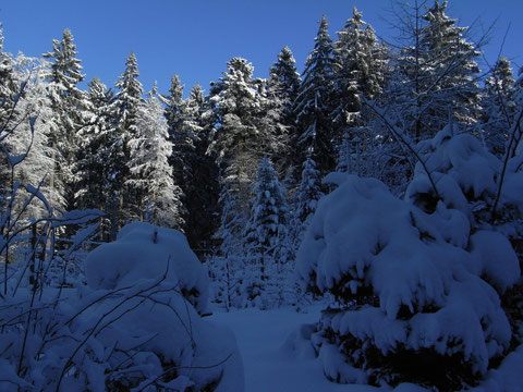 Winter im Wald 1. Januar 2008