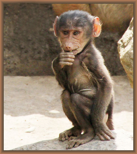 Affenbaby im Zoo Zoom