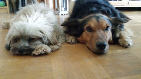 Leo (Marcelino) fand einen großen Freund in Ennepetal.