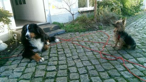 Lola fand in Bottrop eine große Schwester.