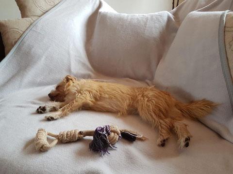 Lotti fand ein großes Sofa in Wallenhorst.