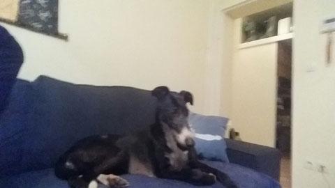 Estrella fand einen Sofaplatz in Berlin.