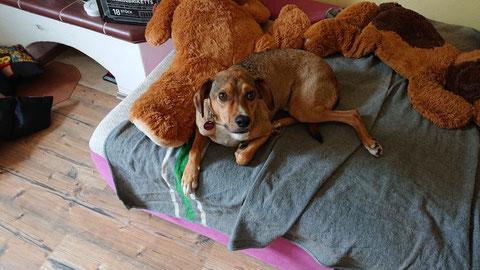 Teddy fand ein kuscheliges Plätzchen in Blieskastel.