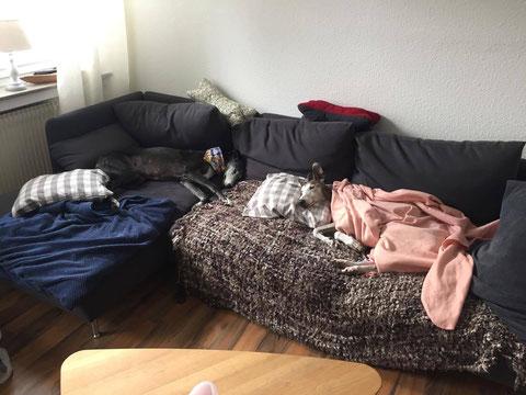 May (links) teilt sich mit Solano ein Sofa in Bielefeld.
