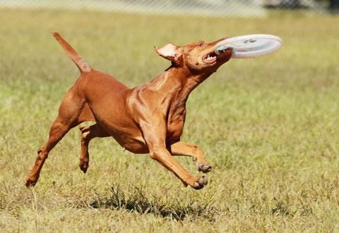Vesper en Disc Dog