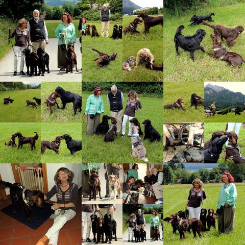 Anouk´s Züchterin auf Besuch mit ihren Hunden Minou, Eldina und Donna
