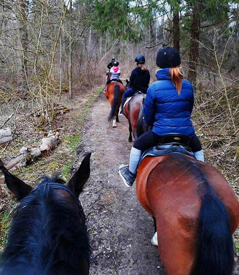 Unterwegs auf wunderschönen Waldwegen unweit der Alz.