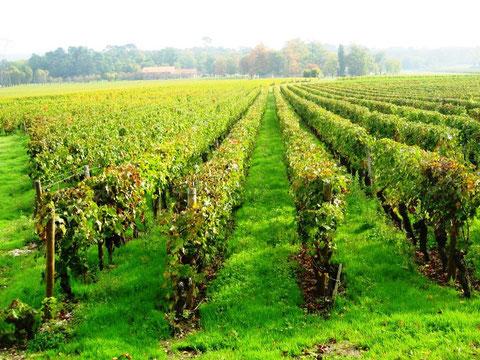 Un vignoble de Martillac