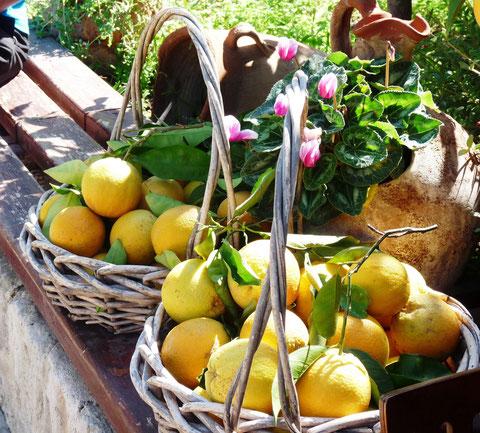 Le citron est recommandé pour l'arthrite, les aphtes, les maux de gorge et les migraines (P.Guillot)