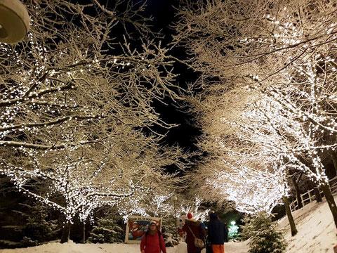 Les arbres s'illuminent pour éclairer la ville plongée dans la nuit polaire ( M. Lapeyrolerie)