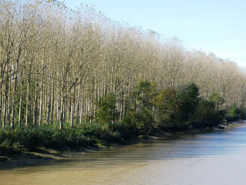 Les rives de la Garonne (Photo M. Depecker)
