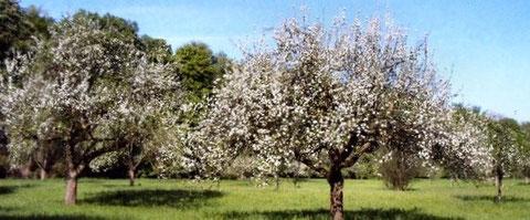 Sei willkommen, lieber Frühling! Sei gegrüßt viel tausendmal!
