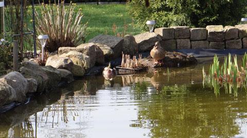 Enten auf unserem Gartenteich