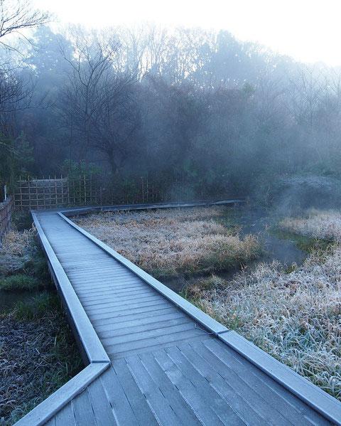 12月30日(2014) 湧水の流れ:早朝のホタルの里・湿性花園にて(三鷹市)