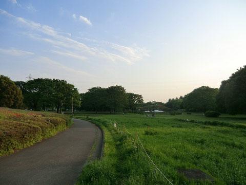 小金井公園もとても広々とした気持ちのよい公園。今日の探索はここで終了。昼食時間もふくめて約5時間の旅でした