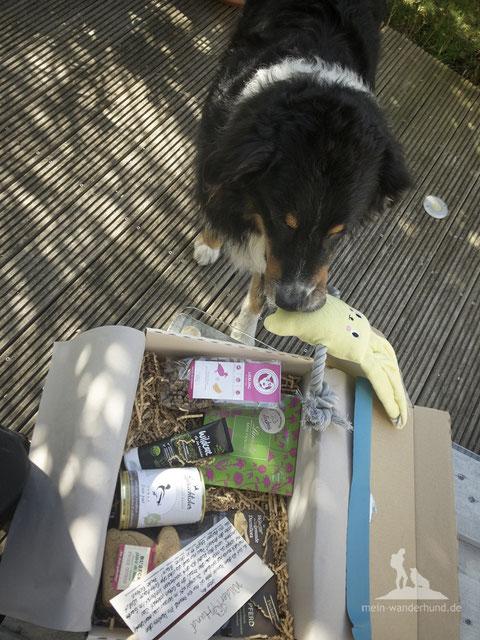 mein-wanderhund; Andrea Obele; test; Wandern mit Hund