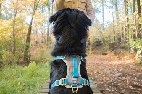 Journey Dog Harness von Kurgo. Foto: Kurgo