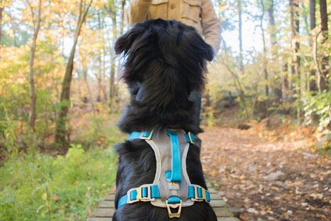 Journey Dog Harness von Kurgo. Foto: Kurgo