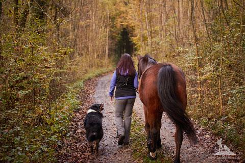 Reitbegleithund; Spaziergang Hund und Pferd