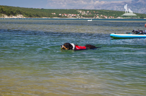 Wandern mit Hund, mein Wanderhund Ari, Andrea Obele, Schwimmen mit Hund; Schwimmweste für Hunde
