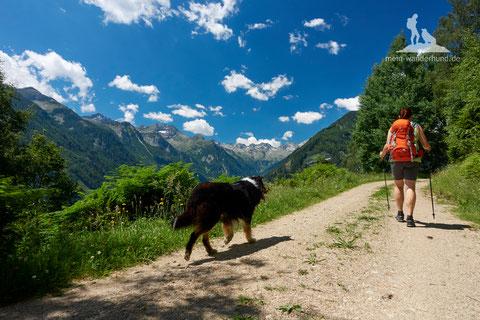 Wandern mit Hund, Malta, Maltatal, Kärnten, mein Wanderhund Ari, Andrea Obele, Urlaub mit Hund, Camping mit Hund