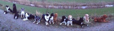 """die verrückte Truppe von Silvester :) und es fehlen sogar noch welche, die im Auto/Haus saßen ;) 5 """"Familien"""", 19 Hunde (C) Yvonne Kantz"""
