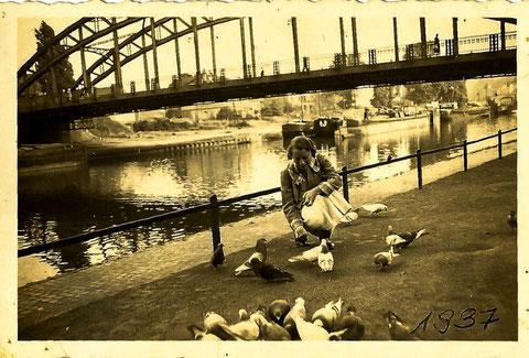 Tauben an der Kaiser Wilhelm Brücke