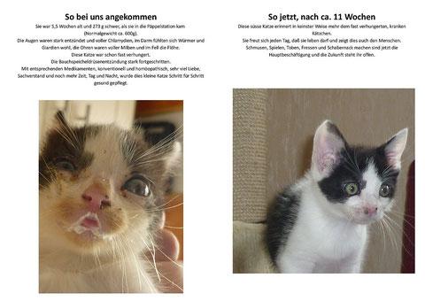 """Diese Bilder haben wir mit freundlicher Erlaubnis von der HP der """"Päppelstation für verwaiste Katzenkinder e.V."""". Klickt sie einfach mal an ... Dieser Verein braucht derzeit dringend Unterstützung ..."""