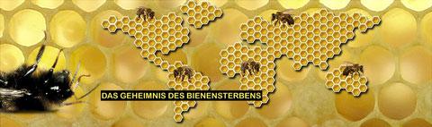 CCD-Bienensterben