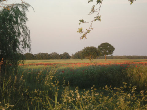 Karpfenteich mit Wiesen