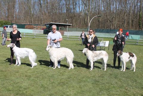 Barsois aus Deutschland, weiß-silberne Barsois, Barsois für Hunde-Shows vom Züchter!