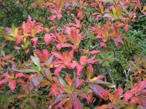Foto von rotgefärbten Blättern im Herbst