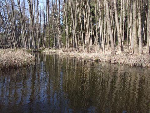 Fließstrecke zum Krapsko-Radlino-See