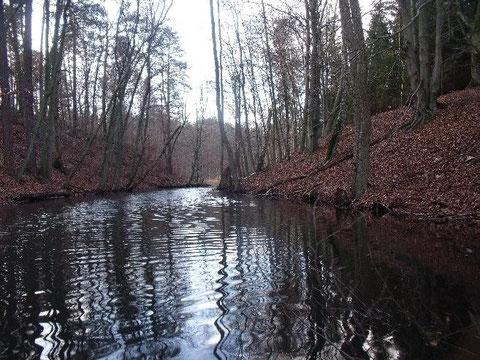 Fließ zwischen Großem Mechowsee und Kolbatzer Mühle