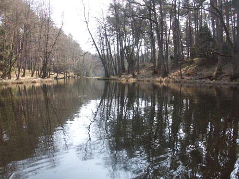 Zauberwald an der Rurzyca