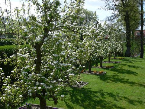 4 mei de perenbomen laten zich van hun mooie kant zien....