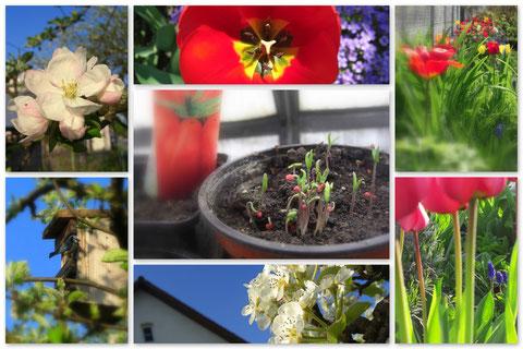 Impressionen aus dem Hausgarten!