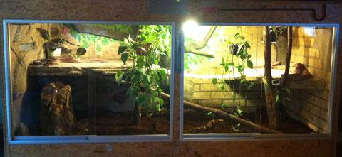 Neues Terrarium seit 11.11.2012