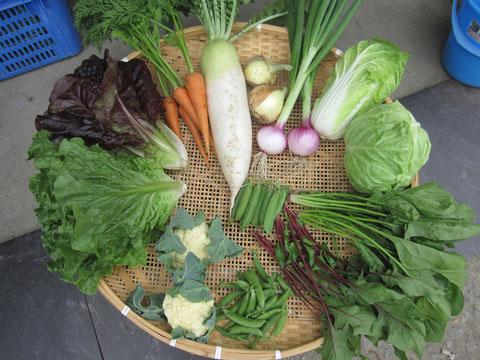 5月の野菜