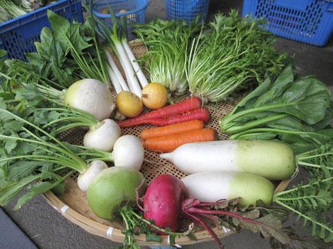 2月の野菜