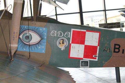 Albatros-5