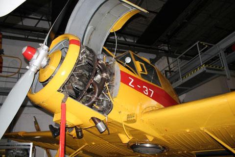 Z37 DM-SUW-3