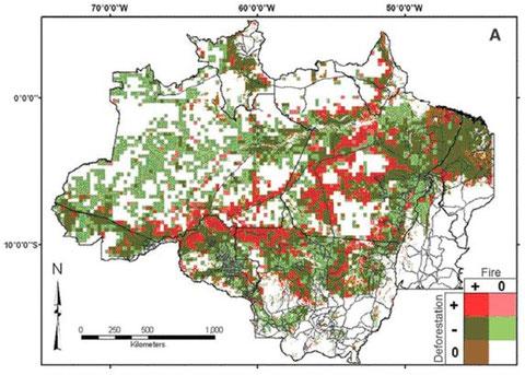 赤い部分は、森林伐採と火災がいずれも増加している地域。濃い緑色の部分は、森林伐採は減少しているが、火災は増加している地域を示す。特に道路の周辺域で集中的に火災が発生していることが分かる。画像提供はアラゴン及びシマブクロ(2010年)