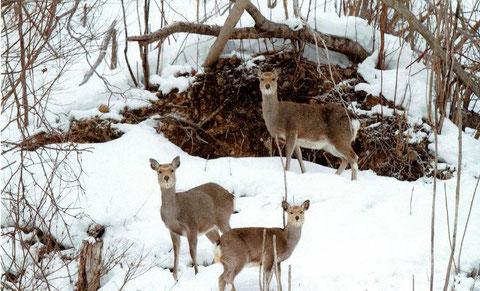 本日は苫小牧在住の雌たちでで女子会という写真
