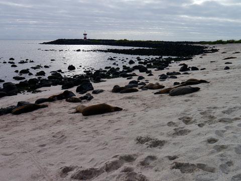 Playa Mann, Isla San Cristobal, Galapagos Islands
