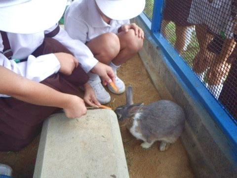 ウサギがやってきた!