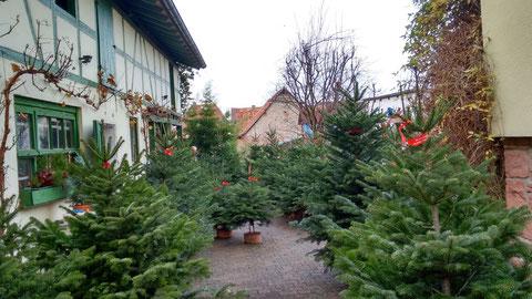 Rauschers kleiner Hofladen in Weihnachtsstimmung :-)